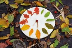 有秋叶的木时钟在黑暗的木背景 库存照片