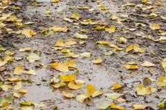 有秋叶的泥泞的路 免版税图库摄影