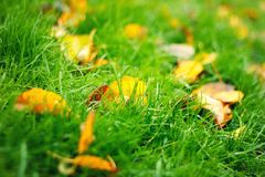 有秋叶的绿色草坪 免版税库存照片