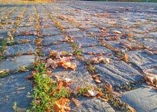 有秋叶的被修补的路 库存照片