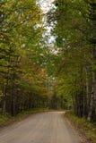 有秋叶的路 免版税库存照片