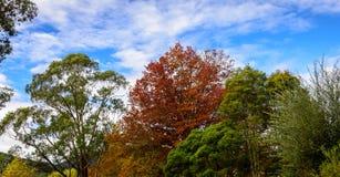 有秋叶的郊区街道 库存照片