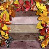 有秋天五颜六色的叶子和莓果的葡萄酒木板 免版税库存照片