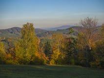 有秋天五颜六色的森林和树和小山bef的绿色草甸 库存照片