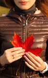 有秋天叶子的女孩在手上 库存照片