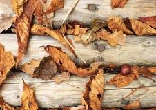 有秋天干燥五颜六色的叶子的木小径,木材人行桥 免版税库存照片
