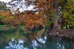 有秋天树的河 库存照片