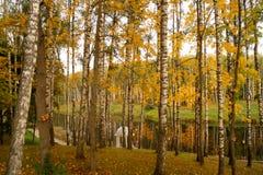 有秋天树的河 免版税图库摄影