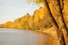 有秋天树的河 免版税库存图片