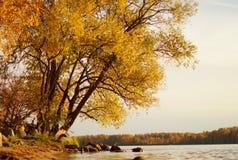 有秋天树的河 免版税库存照片