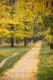 有秋天树的走道在公园,绿草和黄色叶子 免版税库存照片