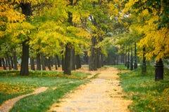 有秋天树的道路在公园,绿草和黄色叶子 库存图片