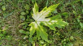 有秋天的第一个标志的叶子 库存照片