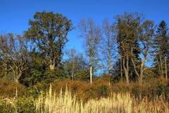 有秋天的颜色的一块森林沼地 库存图片