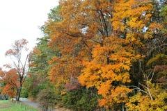 有秋天背景的乡下公路 免版税库存照片