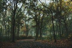 有秋天道路的有雾的森林 库存图片