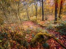 有秋天金牌、褐色和黄色的不可思议的森林沼地 免版税图库摄影