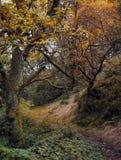 有秋天颜色和扭转的树的秋天黑暗的森林地道路 免版税图库摄影