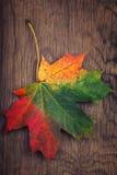 有秋天颜色的枫叶在老木头 免版税库存图片