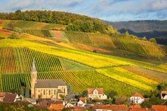有秋天颜色的葡萄园, Pfalz,德国 免版税库存照片