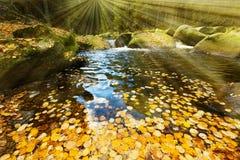 有秋季叶子的河 免版税库存图片