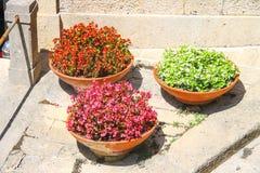 有秋海棠的三个花盆在边路在意大利城市 库存照片