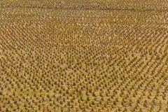 有种植园边的农田 免版税库存图片