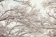 有积雪的分支的冬天森林 免版税库存图片