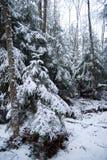有积雪的树和降雪的冬天森林 图库摄影