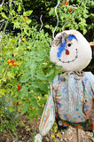 有稻草人的一个菜园 库存照片