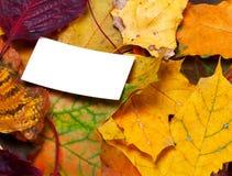 有空的卡片的秋天叶子 免版税图库摄影