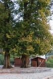 有空的啤酒庭院小屋的城市公园和大橡树在10月 库存图片
