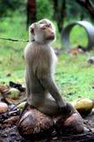有空的猴子 免版税库存图片