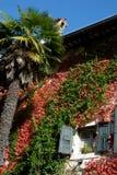有窗口的墙壁和高棕榈树在城堡的庭院里Strassoldo弗留利(意大利) 免版税库存图片