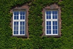 有窗口的老墙壁长满与野生绿色植物 外部设计,室外庭院背景 库存照片