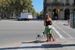 有站立在红绿灯和等待一个绿色红绿灯信号的狗的一名妇女穿过路在巴塞罗那 免版税库存图片