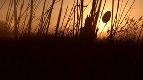 有站立在藤茎的气球的逗人喜爱的女孩在日落 影视素材