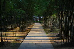 有竹子的路 免版税库存照片