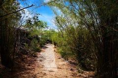 有竹树丛的艰难路线 免版税库存图片