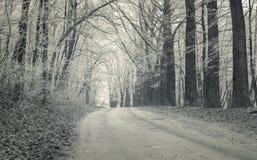 有第一霜的森林公路在12月。 图库摄影