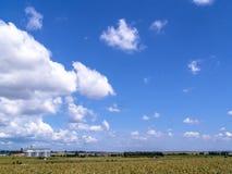 有筒仓的玉米种植园在背景中 免版税图库摄影