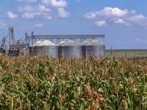 有筒仓的玉米种植园在背景中 图库摄影