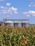 有筒仓的玉米种植园在背景中 免版税库存照片