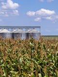 有筒仓的玉米种植园在背景中 免版税库存图片