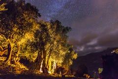 有篝火的森林在与星的晚上在天空 免版税库存照片