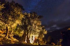 有篝火的森林在与星的晚上在天空 库存照片