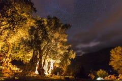有篝火的森林在与星的晚上在天空 图库摄影