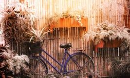 有篮子的葡萄酒自行车在小热带庭园花木12月中 免版税库存图片