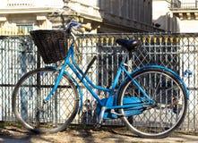 有篮子的蓝色葡萄酒自行车在篱芭 库存图片