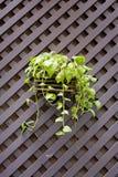 有篱芭的垂悬的花盆 免版税库存照片